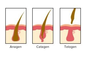 curso dermatologia para auxiliar veterinaria en jerez